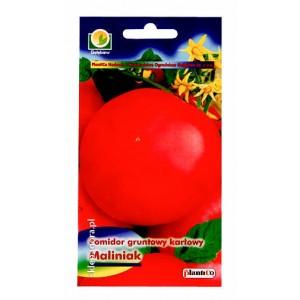 Pomidor Maliniak 0,5g gruntowy karłowy