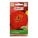 cynia-daliowa-scarlet-flame-czerwona-1g