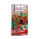 Pomidor Bajaja 0,2g - do pojemników typ cherry