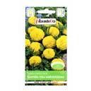 Aksamitka niska wielkokwiatowa Mona Żółta 1g