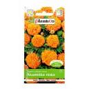 Aksamitka niska pomarańczowa 1g